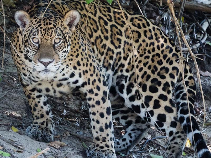 CLT-Jaguar-CC-Bart-Von-Dorp-2014-large